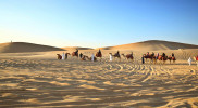 Morning Desert Safari in Dubai: Gallery Photo 3x8p7n