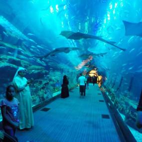 n0vkq3 استديو الصور :دبي في At the Top + Dubai Aquarium