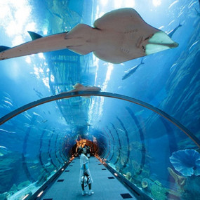 38y1rn استديو الصور :دبي في At the Top + Dubai Aquarium