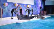 Dolphin & Seal Show - Dubai Dolphinarium in Dubai: Gallery Photo 3ewxw3