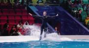 Dolphin & Seal Show - Dubai Dolphinarium in Dubai: Gallery Photo 34e6vz