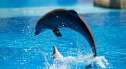 Dolphin & Seal Show - Dubai Dolphinarium in Dubai: Gallery Photo zwpx43
