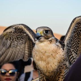 7z947n استديو الصور :دبي في Deluxe Desert Safari with BBQ and Transfer