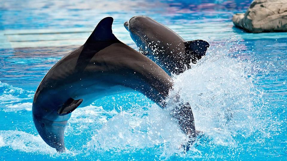 Dolphin & Seal Show - Dubai Dolphinarium,Dubai Dolphinarium,Dubai Dolphinarium