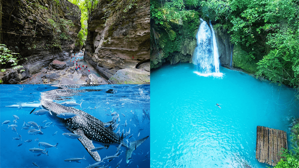 Whale Shark Encounter + Canyoneering,Badian, Cebu,Tours